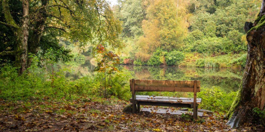 9 - Fishpond Wood, Bewerley, Nidderdale