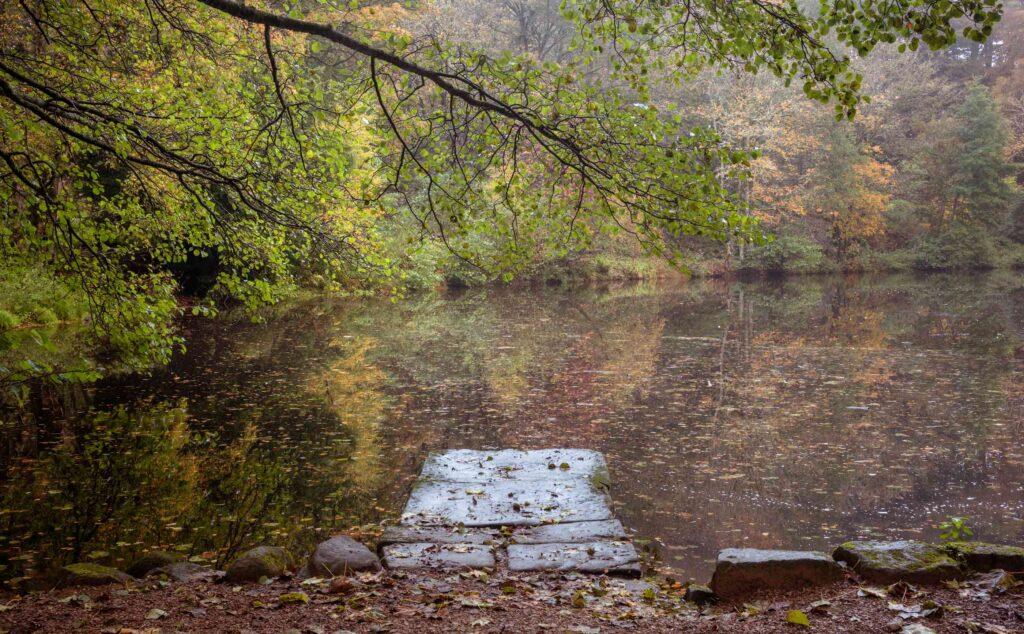 Fishpond Wood Jetty 2800 - Fishpond Wood, Bewerley, Nidderdale