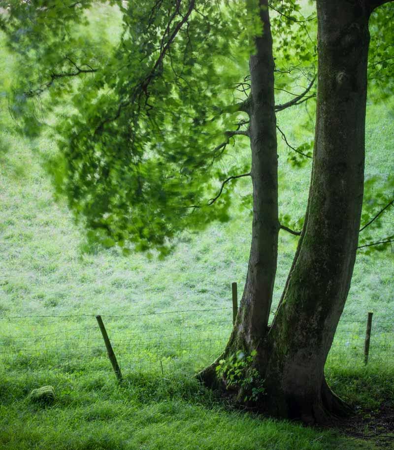 Windy morning Fishpond Wood - Fishpond Wood, Bewerley, Nidderdale
