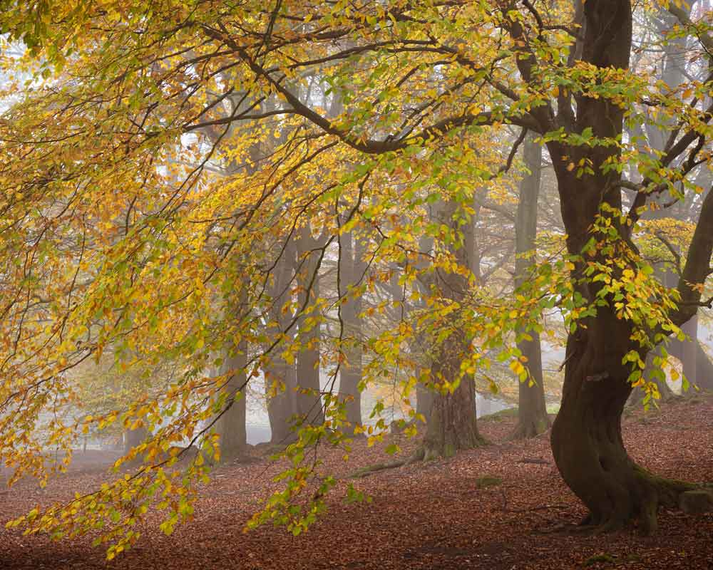 Autumn colours in Fishpond Wood Bewerley - Fishpond Wood, Bewerley, Nidderdale
