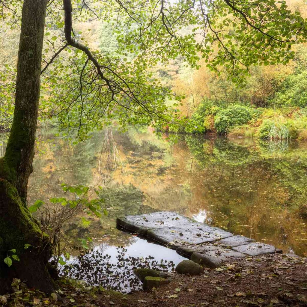The jetty at Fishpond Wood, Bewerley, Nidderdale in autumn