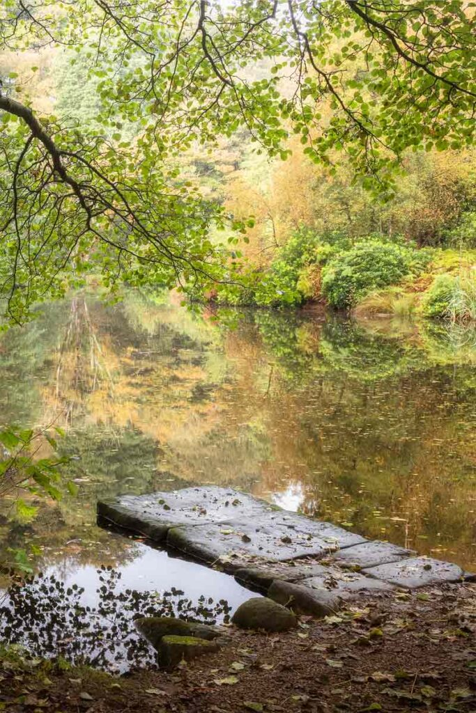 Fishpond Wood jetty in autumn - Fishpond Wood, Bewerley, Nidderdale