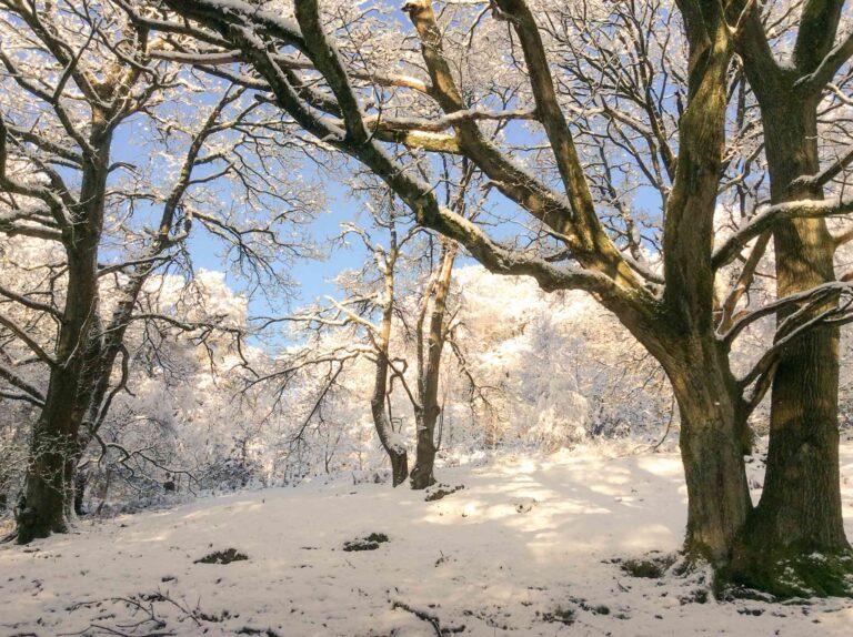 Fishpond Wood, Bewerley, Nidderdale in the snow