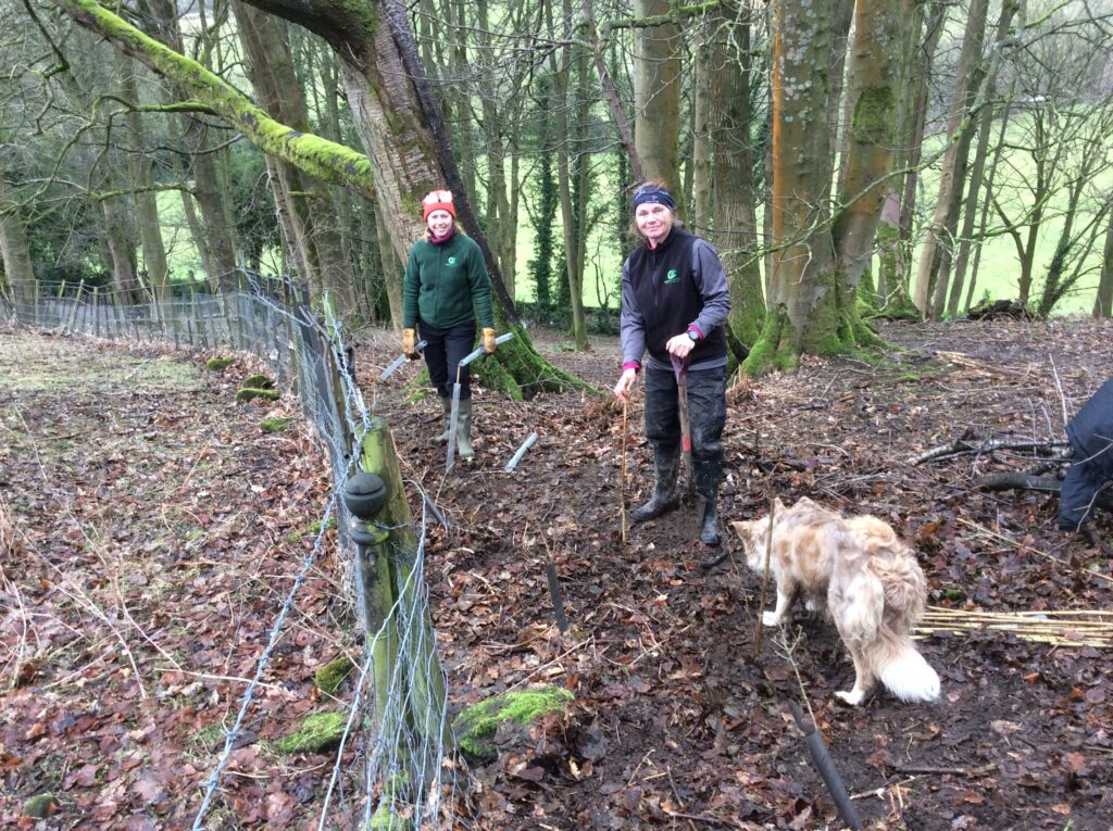 Sharron and Sally from Open Country planting over 200 hedging plants at Fishpond Wood, Bewerley, Nidderdale
